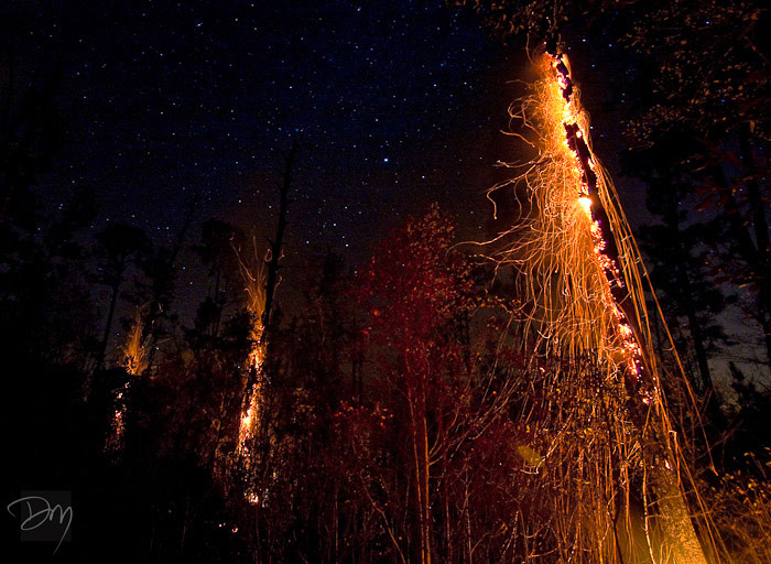 Forest Fire Under the Cosmos