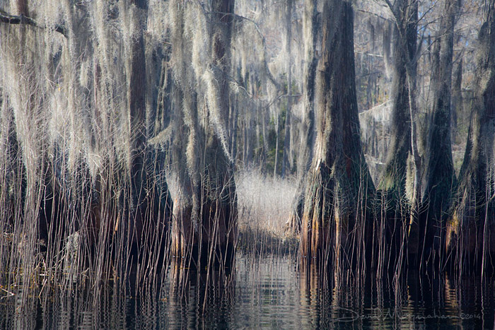 Textures of the Swamp