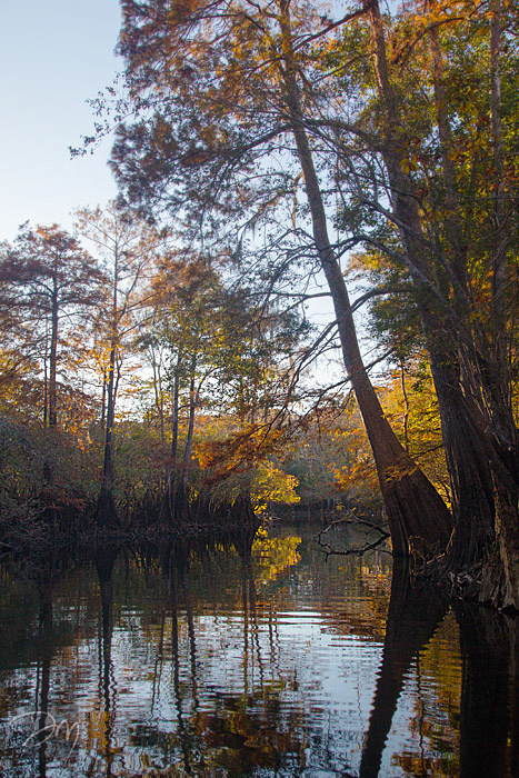 Holmes Creek Vista