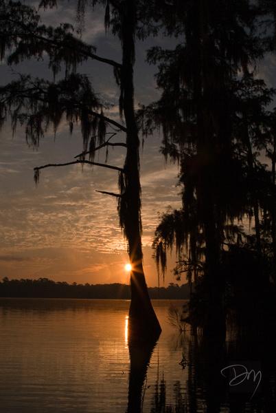 Lake Bradford Sunrise