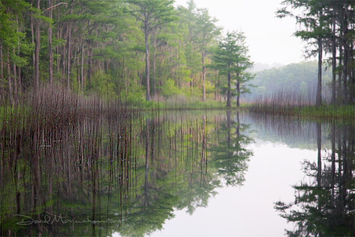 Bradford Creek