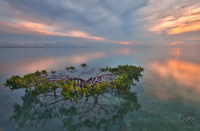 Solo Mangrove