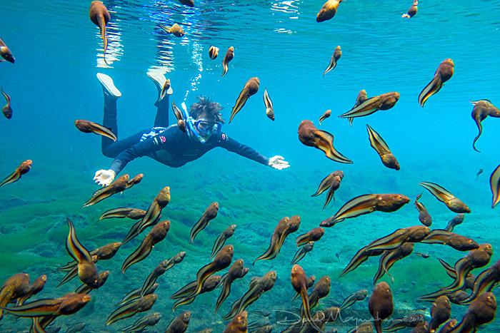 Crystal Diver