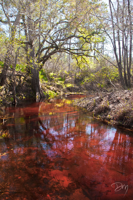 Sopchoppy_Red_Waters_3229-lg