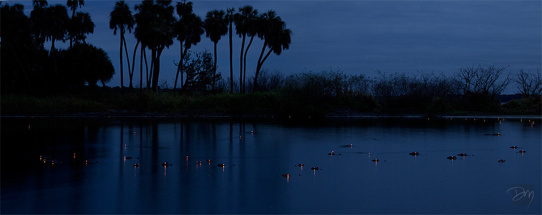 Gator_Eyes_Palm_Pano_3191-blg