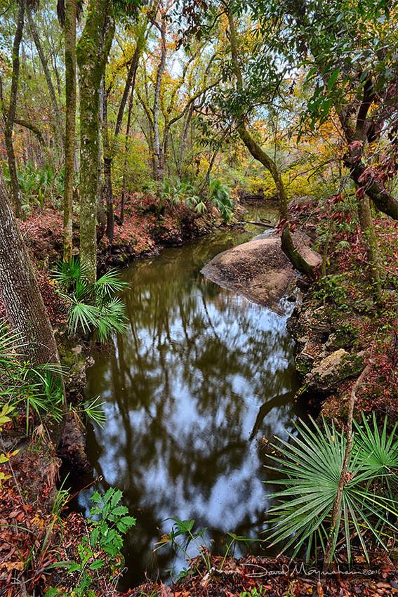 Aucilla River Sink Autumn
