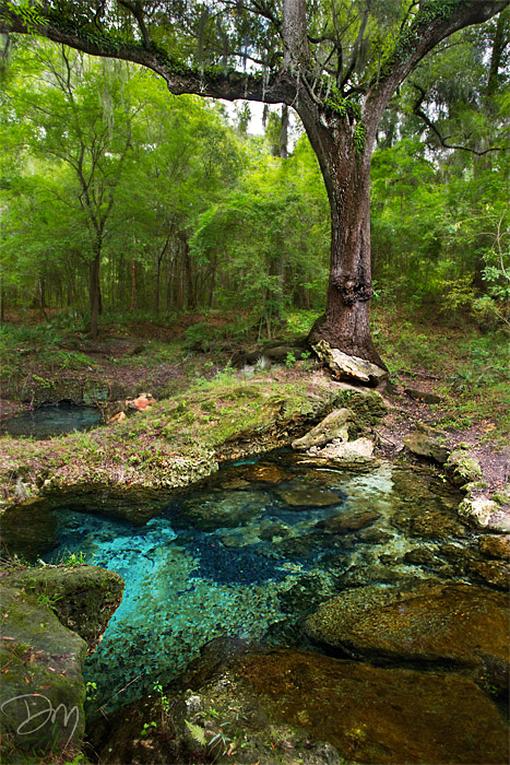 Spring of the Suwannee
