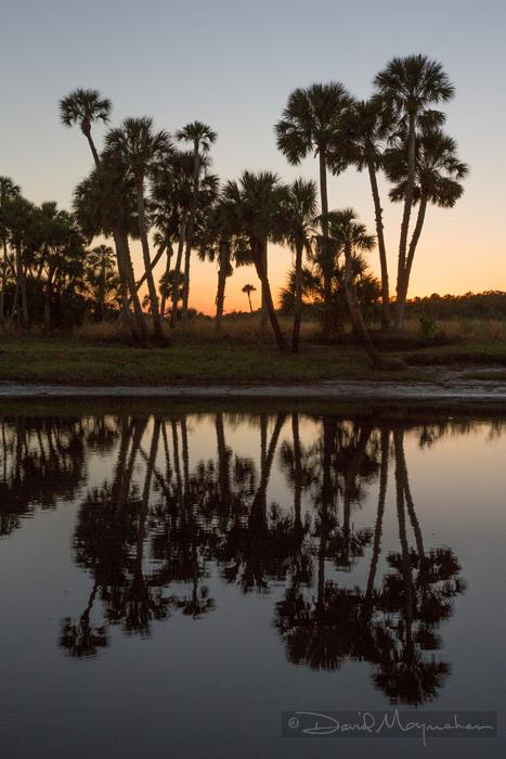 Palm_Sunset