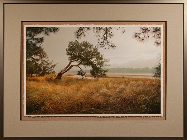 Leaning Into Marsh - Framed