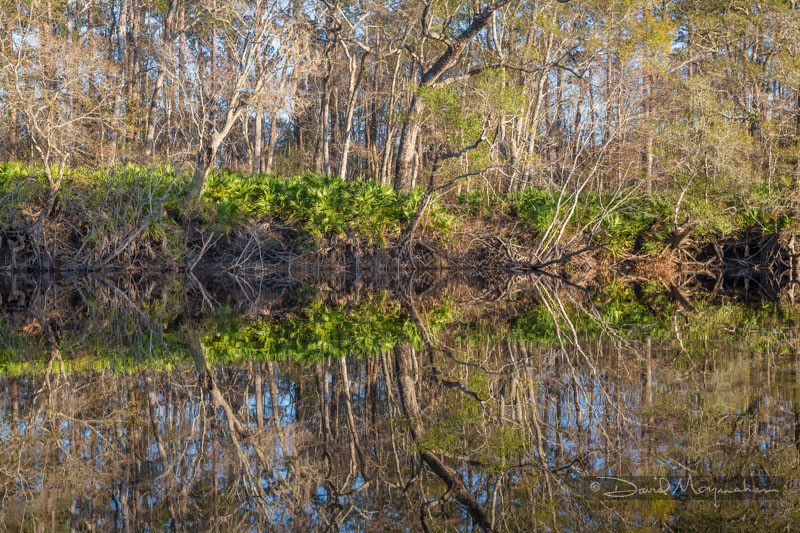 Reflections on Satilla 2