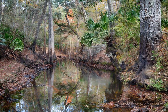 Aucilla River Sink Autumn II