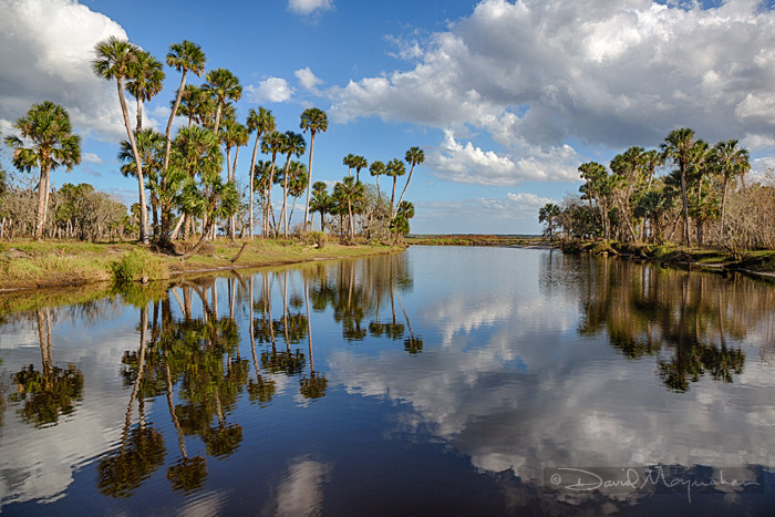 Reflections_on_Palm_Groves
