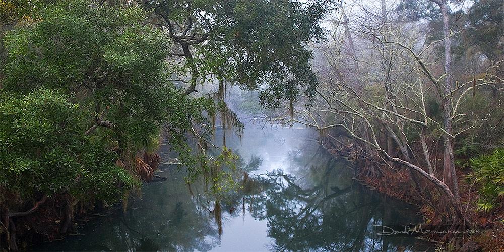 Aucilla River Panorama