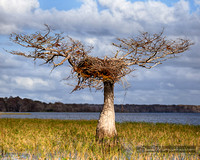 Big_Nest_Little_Tree