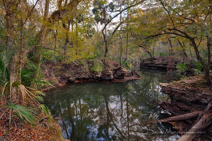 Aucilla River Sink Autumn IV