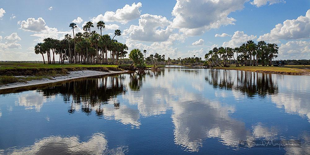 Palm Panorama