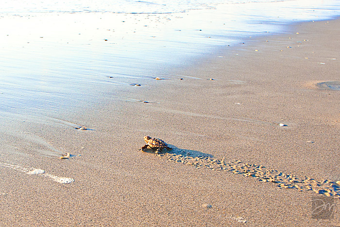 Hatchling_Reach_Water_1793-lg