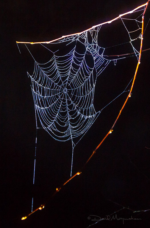 Web of Night