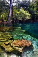 Royal_Spring_Suwannee