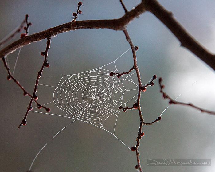 dewdrop_web