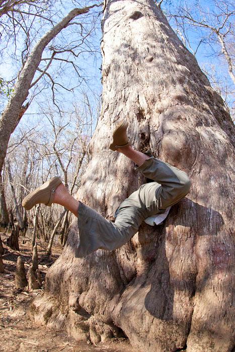 Entering Big Tree