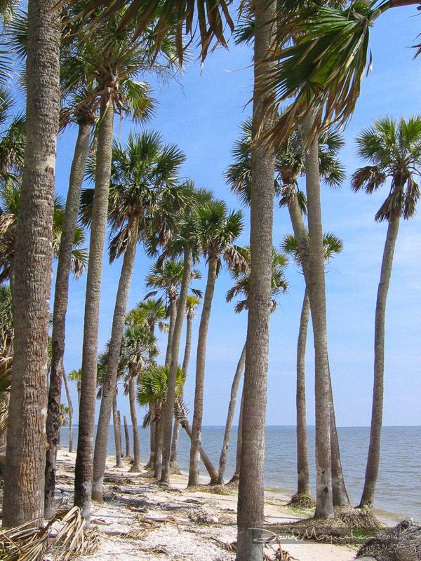 Palm Coast of St. Vincent Island