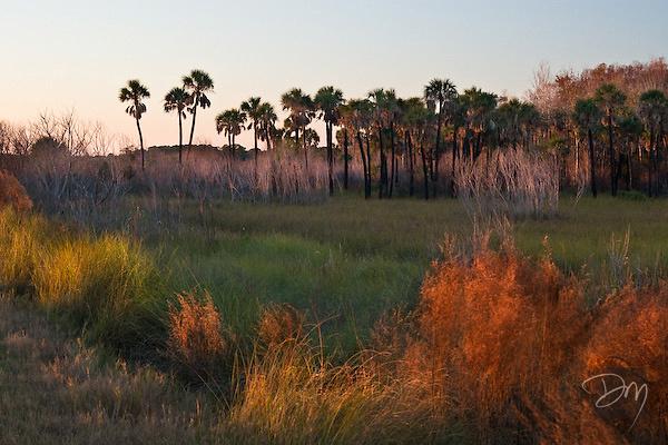 Burnt Palms at Sunset